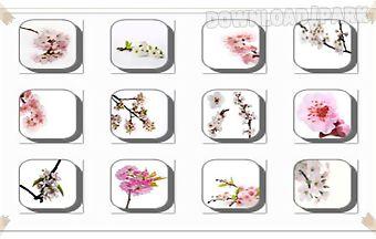 Cherry blossom flowers onet clas..