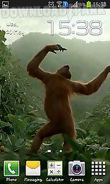 wild dance crazy monkey