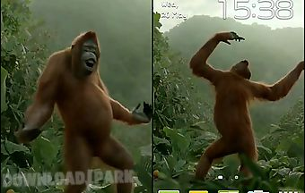 Wild dance crazy monkey