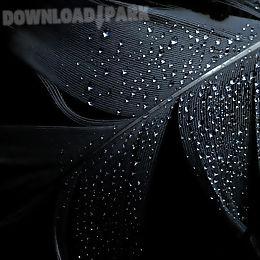 black live wallpaper