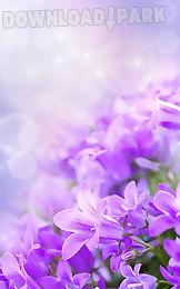 gentle flowers live wallpaper