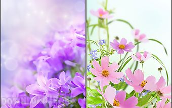 Gentle flowers live wallpaper