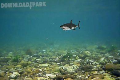 shark bite aquarium