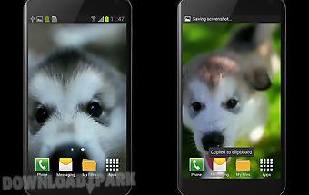 Little puppy video wallpaper