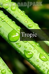 tropic rain forest stress