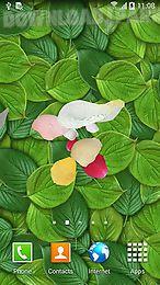petals 3d by blackbird wallpapers
