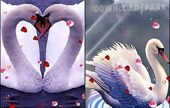 Swans: love
