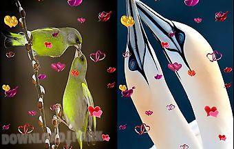 Love: birds