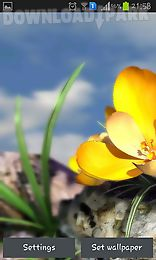 nature live: spring flowers 3d