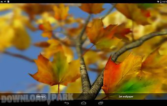 Autumn leaves 3d by alexander ke..