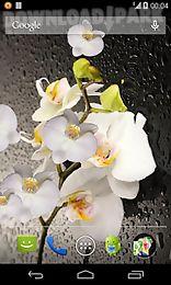 orchid 3d live wallpaper