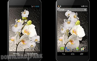 Orchid 3d live wallpaper