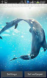 sea dolphin