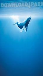 whale live wallpaper