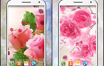 Pink rose live wallpaper hd