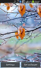 autumn raindrops