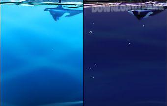 Asus: my ocean
