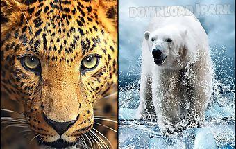 Wild animals live wallpaper