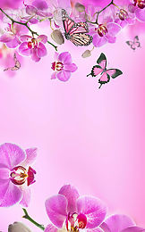Pink Flowers Live Wallpaper Android Live Wallpaper Free Download In Apk