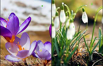 Early spring: nature