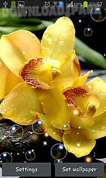 orchid hd
