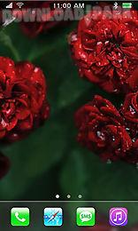 roses: paradise garden