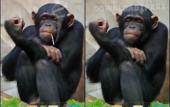 Funny monkey live wallpaper