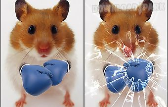 Funny hamster: cracked screen