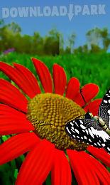 live wallpaper butterfly x