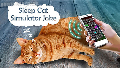 sleep cat simulator joke