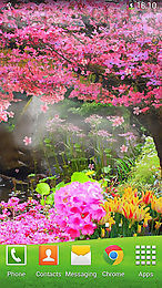 sakura by orchid