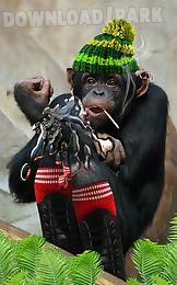bad talking monkey