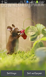 mouse with strawberries