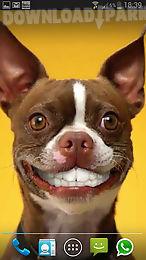 dog smiles live wallpaper