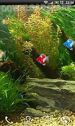goldfish aquarium lwp