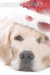 sad christmas dog live wallpaper