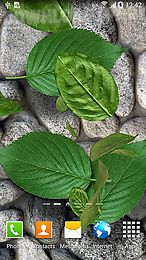 leaves 3d
