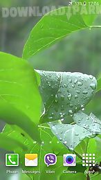 rainstorm