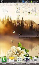 rose: summer morning