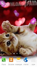 cute animals by live wallpapers 3d