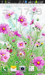 sweet flowers