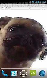 dog licker live wallpaper free