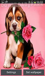 puppy rose live wallpaper