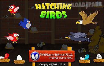 Hatching birds
