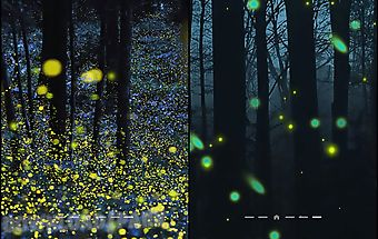 Fireflies by phoenix live wallpa..