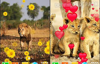 Lion by live wallpapers free