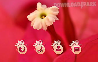 Red flower cm launcher theme