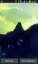 lonely black kitty