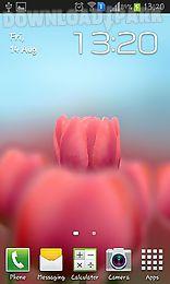 tulip 3d