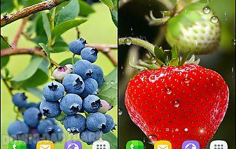 Berries food
